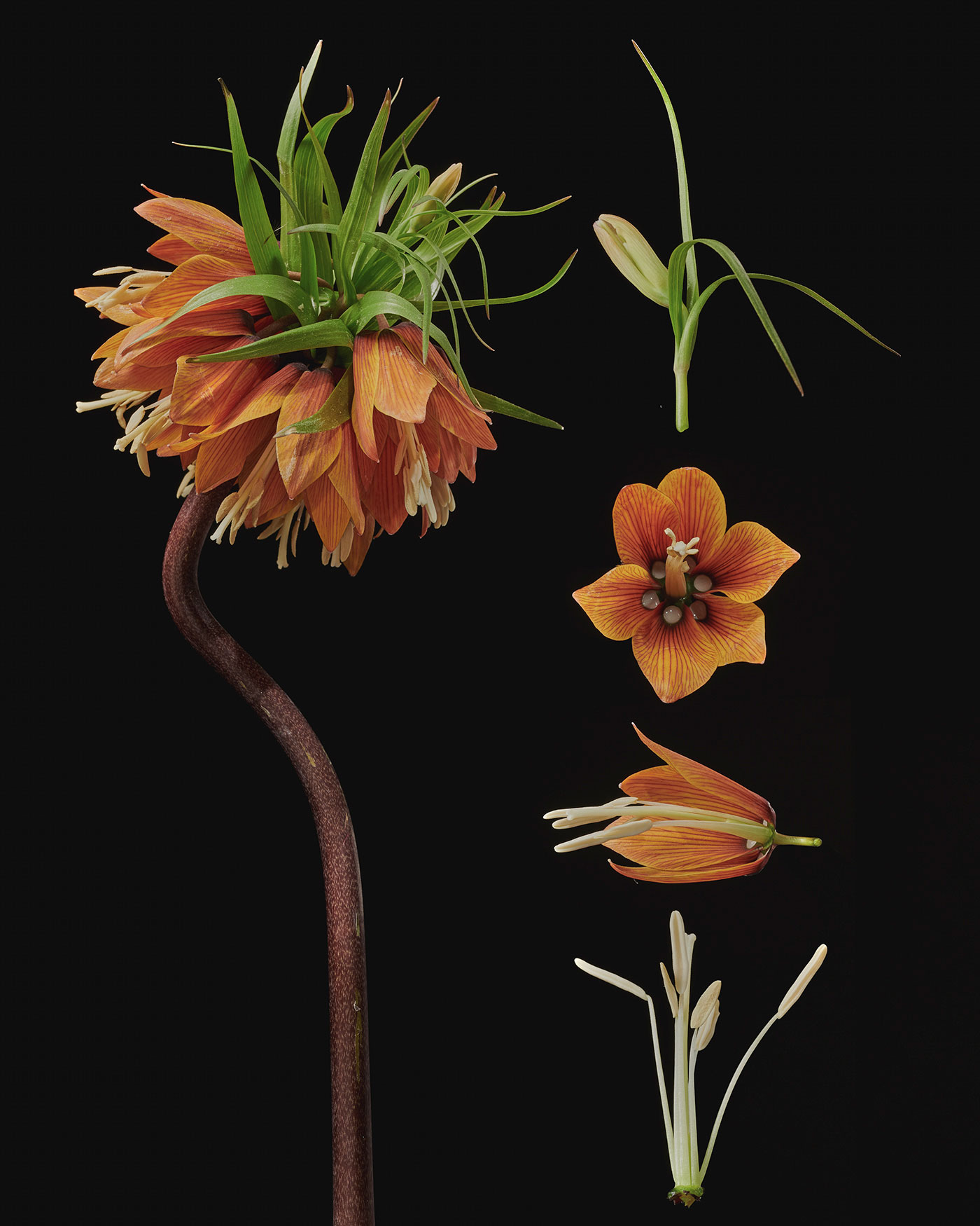 Dissecting Flowers by Tim van der Most
